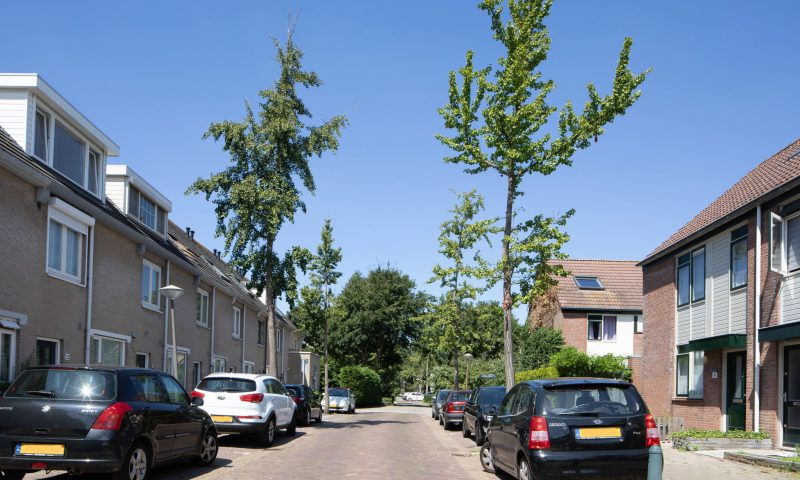 Bekijk foto 4 van Dr. R.J. Fruinstraat 9